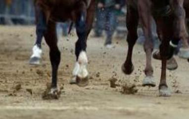 Cavallo muore in pista al Palio di Buti