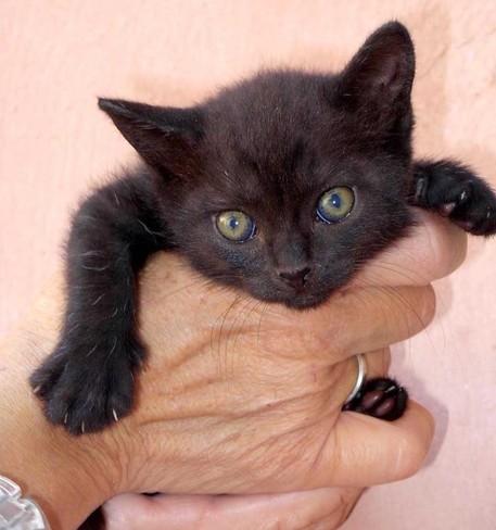 Polfer salva gattini sotto treno