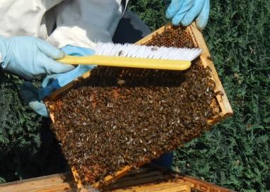 Chi sceglie di fare l'apicoltore