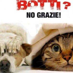 """Wwf: """"Stop ai botti di Capodanno: gli animali rischiano la vita"""""""